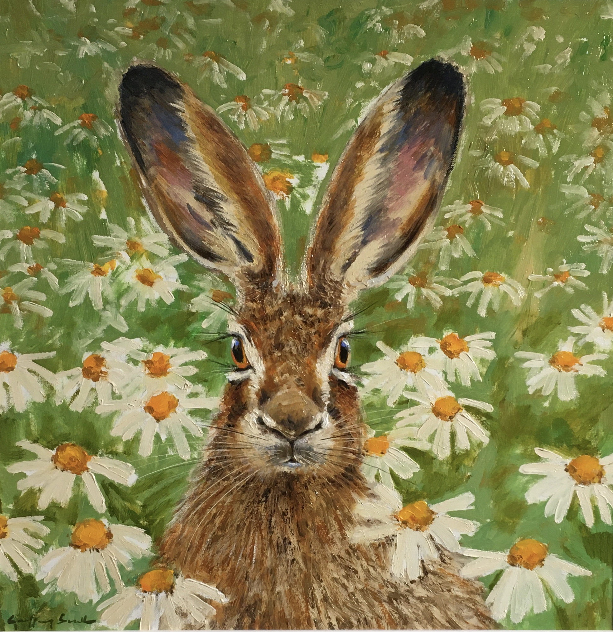 Hare daisies